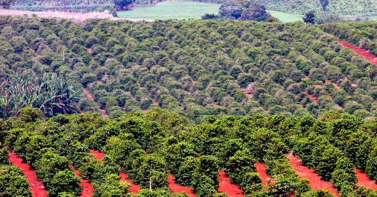 conab765 - Produção de café deve chegar a 58 milhões de sacas em 2018