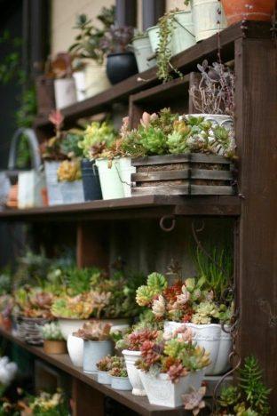 dcadc3285fbebe30f6eddf0fac833998 312x468 - Tendências Pinterest   decoração com plantas
