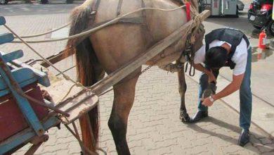 equinos sl 390x220 - Sempa e Ulbra promovem consultas e exames para equinos em São Leopoldo