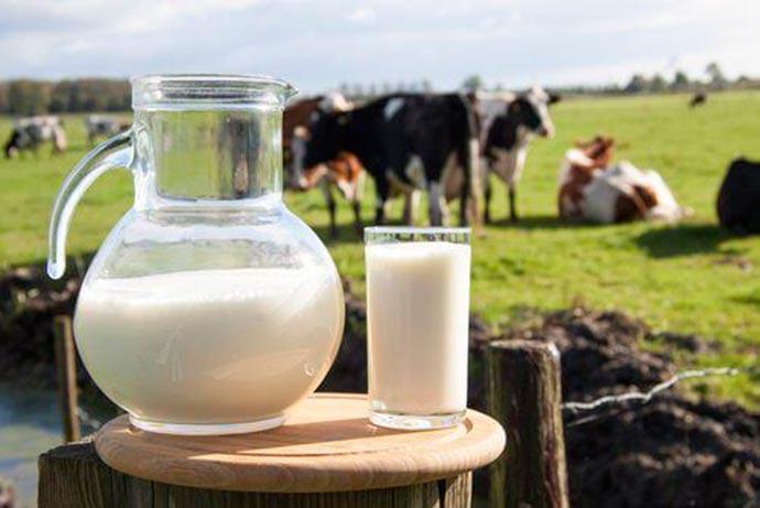 leite - Você sabe o que é caseína?