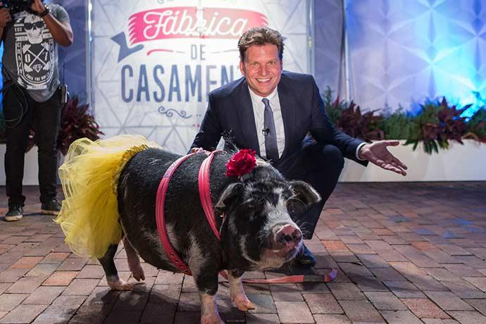 """porca casamento - Porca leva alianças no """"Fábrica de Casamentos"""" deste sábado (12)"""