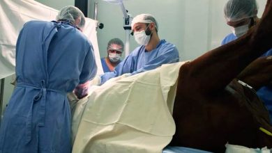 Medicina Veterinária ucs 390x220 - Bloco Cirúrgico para Grandes Animais passa a integrar a infraestrutura da Medicina Veterinária da UCS