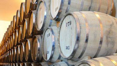 Photo of Semiárido aborda a nova geografia do mundo do vinho