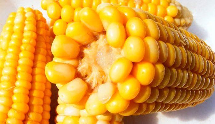 milho 699x405 - Milho tem alto nível de antioxidantes