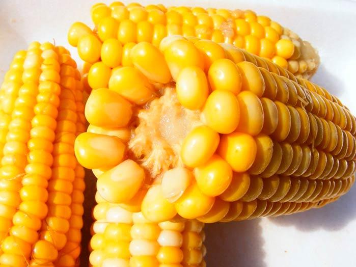 milho - Milho tem alto nível de antioxidantes