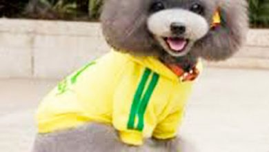 pet 390x220 - Cuidados com os pets durante os jogos da Copa do Mundo
