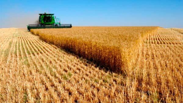 safra grãos - IBGE reduz para 228,1 milhões de toneladas previsão de safra de grãos
