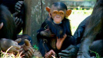 zoo 390x220 - RS lança consulta pública para gestão do Parque Zoológico
