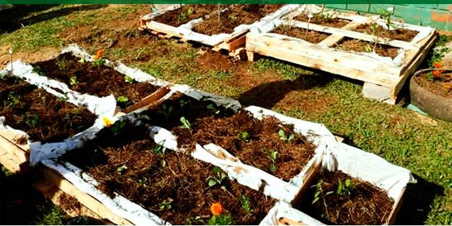 COOPERAÇÃO E SAÚDE - Estudante de nutrição inicia horta junto aos colaboradores da Cooperativa Univale