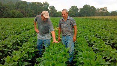 colheita da soja 390x220 - Sicredi vai disponibilizar R$ 6,93 bilhões no Plano Safra 2018/2019