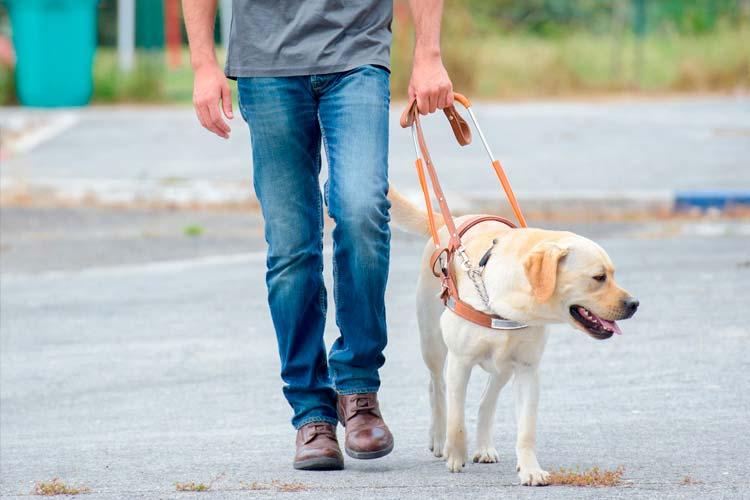 cachorro - Melhores raças de cão-guia