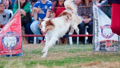 Photo of Campeonato de adestramento de cães na Expointer
