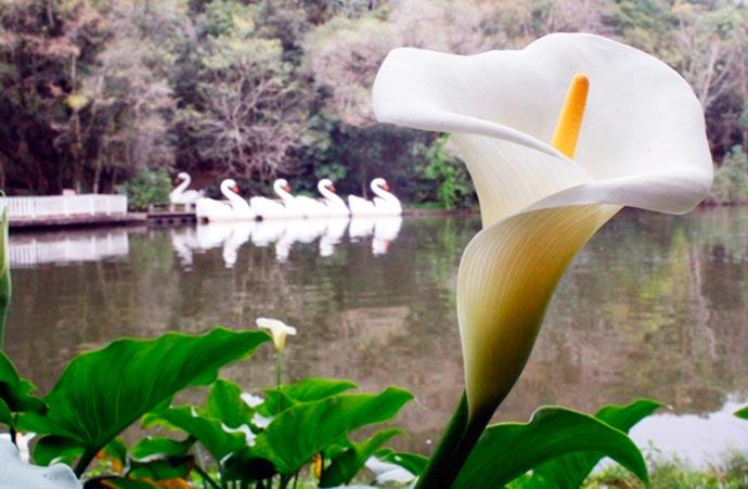 concurso foto - Concurso Fotográfico em Nova Petrópolis tem inscrições abertas até 10/09