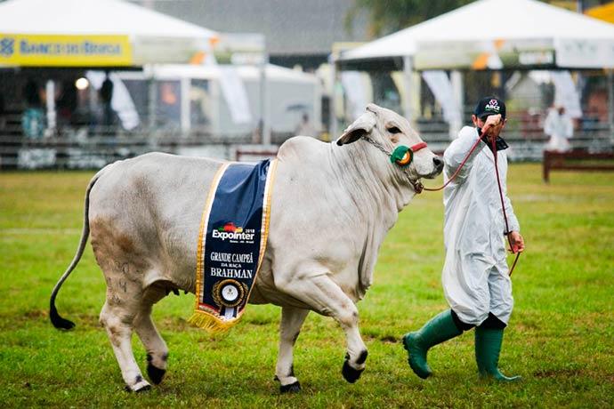 desfile expointer1 - Desfile dos campeões supera chuva na Expointer