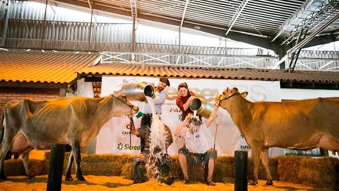 leiteira - Alegrete é bicampeão no Concurso Leiteiro da Raça Jersey na Expointer