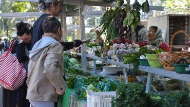 organico 390x220 - Produção orgânica cresce no país