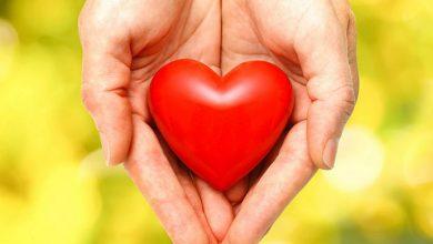 Coração3 390x220 - Nutrientes que fazem bem ao coração