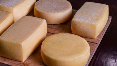 Governo do Estado regulamenta o queijo artesanal serrano 390x220 - Governo gaúcho regulamenta queijo artesanal serrano