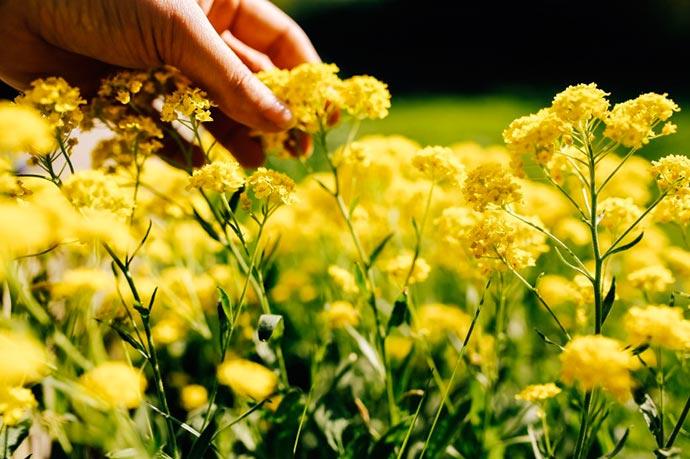 flor - Primavera começa hoje às 22h54