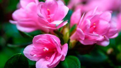 flor5 390x220 - Primavera começa hoje às 22h54