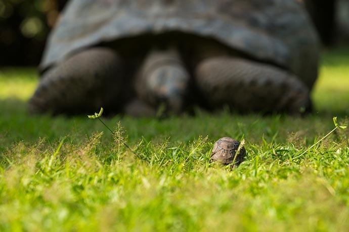 tartarugas - Ilha de Seychelles se engaja na luta contra o plástico