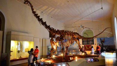 ts museu dinossauro 20150416 16 390x220 - Saiba o que Museu Nacional guardava