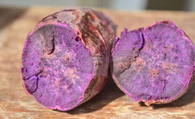 Batata doce Luiza Credito Aires Mariga Epagri - Epagri desenvolve batata-doce que protege contra doenças