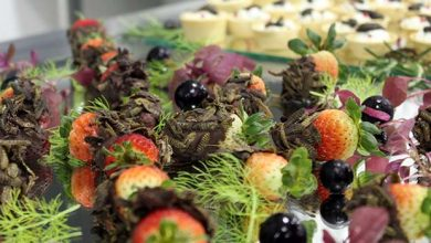 Faculdade Avantis insetos na gastronomia 390x220 - Palestra na Faculdade Avantis: insetos na alimentação