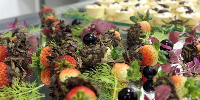Faculdade Avantis insetos na gastronomia - Palestra na Faculdade Avantis: insetos na alimentação