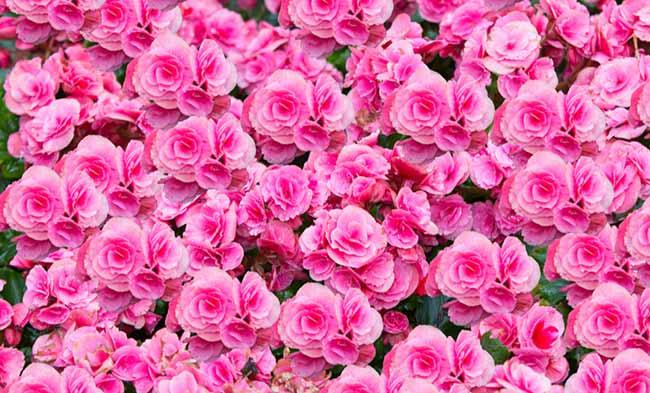 """Flores cor de rosa - Senac São Leopoldo realiza o """"Outubro Rosa Senac"""""""