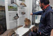 MuseoHistoriaNatural FaunayPublico1 220x150 - Reabre o Museu Nacional de História Natural do Uruguai