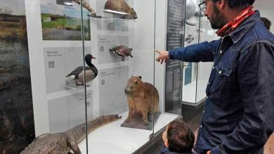 MuseoHistoriaNatural FaunayPublico1 390x220 - Reabre o Museu Nacional de História Natural do Uruguai