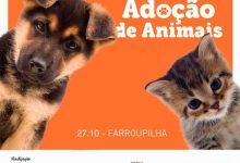 feira animais 220x150 - Feira de adoção de animais neste sábado em Farroupilha