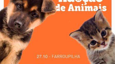 feira animais 390x220 - Feira de adoção de animais neste sábado em Farroupilha