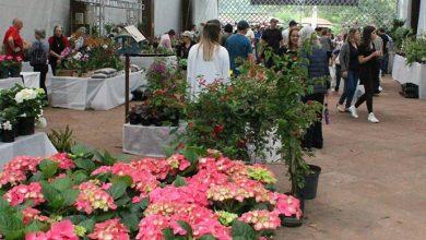 feira flores 390x220 - Feira das Flores inicia nesta sexta-feira em Ivoti
