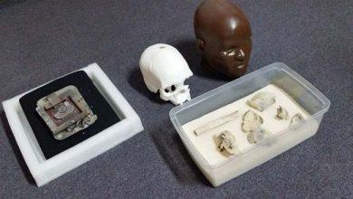 luzia 1 390x220 - Crânio de Luzia é encontrado no Museu Nacional