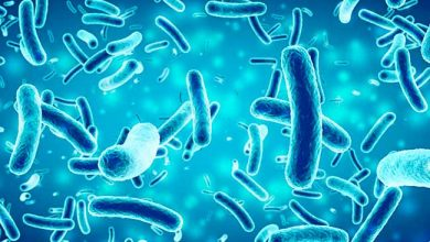 salmonella  390x220 - Salmonella tem resistência a diferentes antibióticos