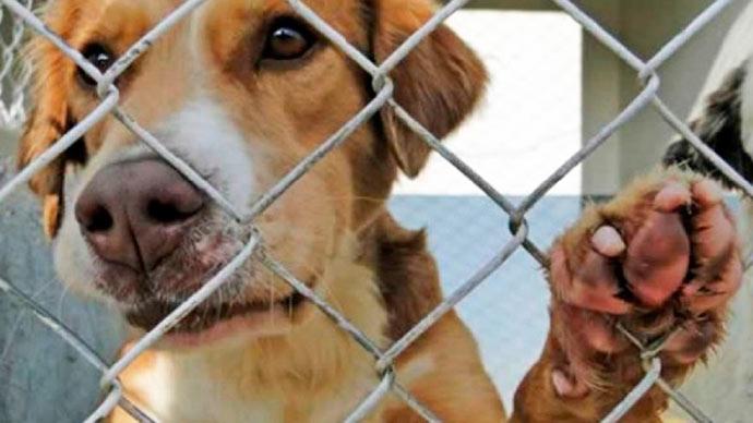 saude animal - Dia da Saúde Animal acontece em Eldorado do Sul dia 27