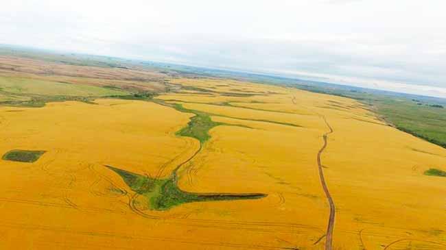 Bioma Pampa - Fepam fiscaliza propriedades rurais localizadas no Bioma Pampa