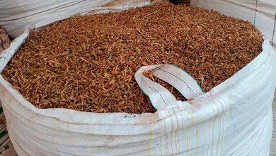 IPP home 390x220 - Alimentos pressionam queda nos preços da indústria em outubro