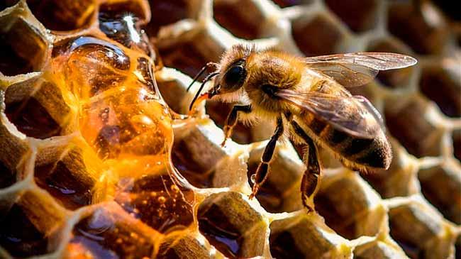 abelha - Colmeias inteligentes ajudam a frear o desaparecimento de abelhas no mundo todo