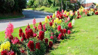 crop creditos carlos borges 3 31102018103354 390x220 - Troca de flores está sendo realizada em Gramado