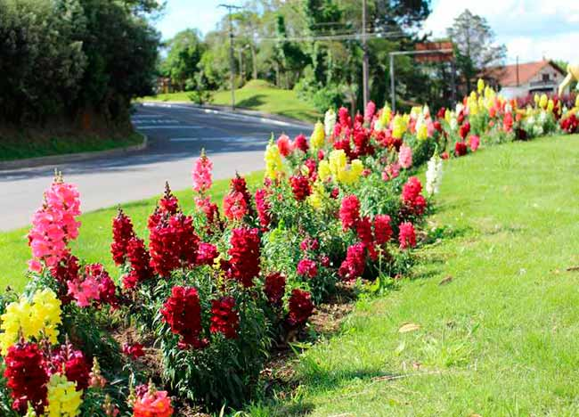 crop creditos carlos borges 3 31102018103354 - Troca de flores está sendo realizada em Gramado