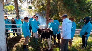 leitei 390x220 - Curso de bovinos de leite no Cetanp está com vagas abertas