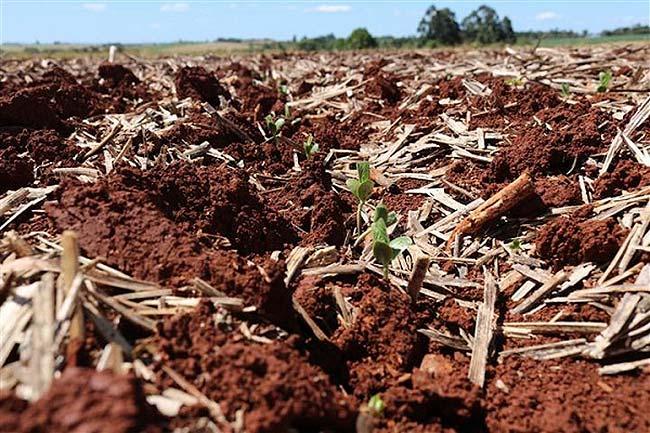 plantio - Segue plantio das culturas de verão no RS