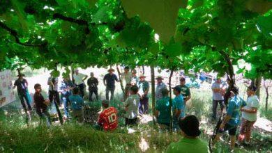 viticultores em Garibaldi 390x220 - Dia de Campo reuniu viticultores em Garibaldi