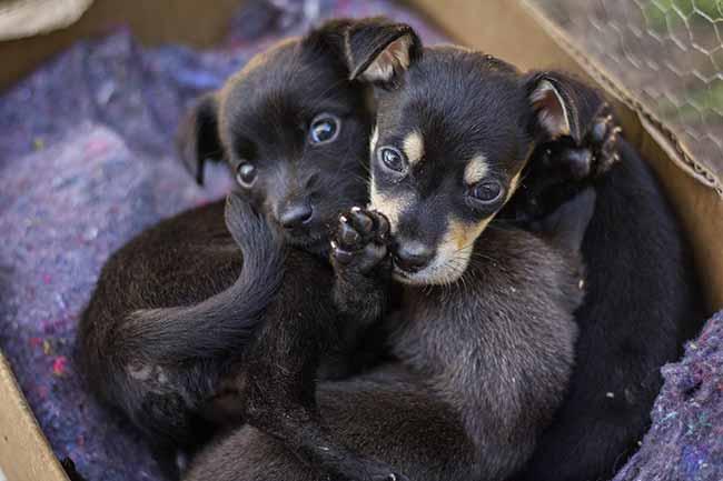 dogs - Dobra número de animais abandonados em São Leopoldo nas férias