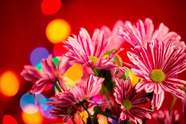 flor4 - Dicas de flores para atrair boas energias em 2019