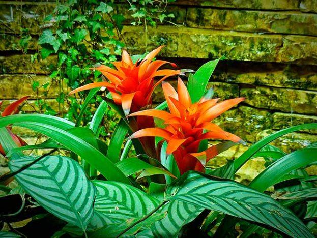 Bromélia 623x468 - Dicas de flores para decorar a casa no verão