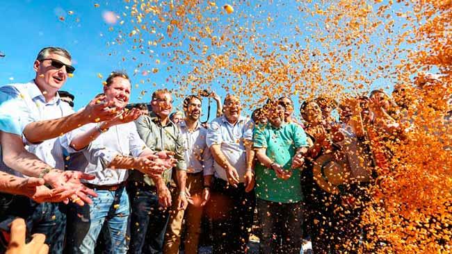 Colheita do milho é aberta com expectativa de 56 milhões de toneladas - RS: abertura da colheita do milho gera expectativa de 5,6 milhões de toneladas